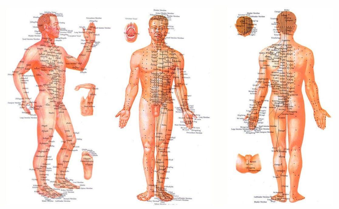 Pouziti Medenych Plisku Ke Stimulaci Imunitniho Systemu Energy